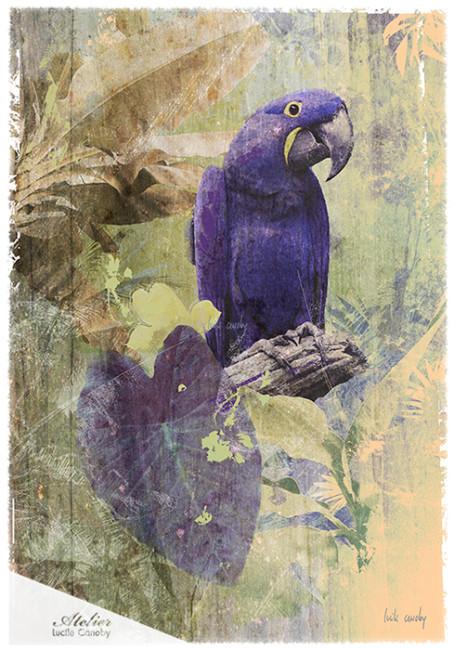 Purple-Bird-81*116